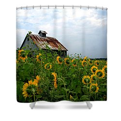 Sunflowers Along Rt 6 Shower Curtain