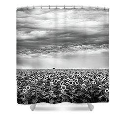 Sunflowers And Rain Showers Shower Curtain