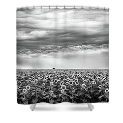 Sunflowers And Rain Showers Shower Curtain by Penny Meyers