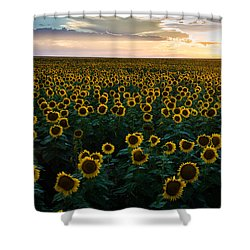 Sunflowers At Sunset Shower Curtain