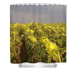 Sunflowers Before The Storm Shower Curtain
