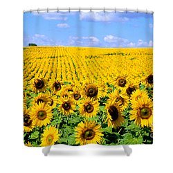 Sunflowers Shower Curtain by Bill Bachmann and Photo Researchers