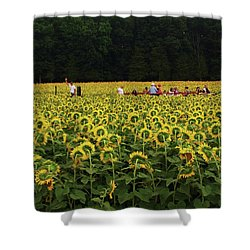 Sunflowers Everywhere Shower Curtain by John Scates