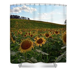 Shower Curtain featuring the photograph Sunflowers Fields  by Frank Stallone
