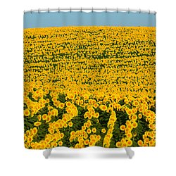 Sunflowers Galore Shower Curtain by Catherine Sherman