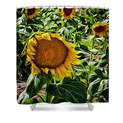 Sunflowers Glaze Shower Curtain