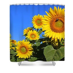 Sunflowers In Blue Shower Curtain