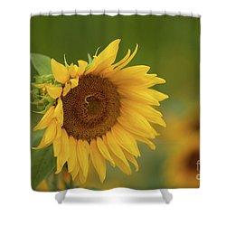 Sunflowers In Field Shower Curtain