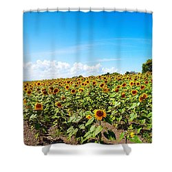 Shower Curtain featuring the photograph Sunflowers In Ithaca New York by Paul Ge