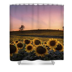 Sunflowers In Pink Shower Curtain
