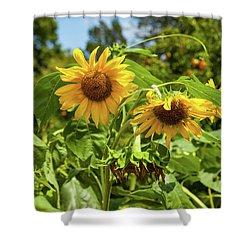 Sunflowers In Sunshine Shower Curtain