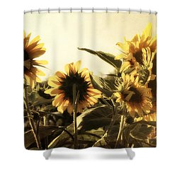 Shower Curtain featuring the photograph Sunflowers In Tone by Glenn McCarthy Art and Photography