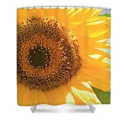 Sunflowers  Shower Curtain by Marna Edwards Flavell