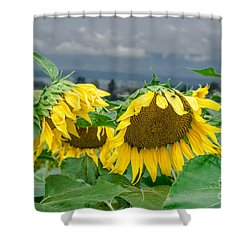 Sunflowers On A Rainy Day Shower Curtain