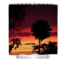 Sunflower's Sunset Shower Curtain