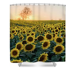 Sunflowers V Shower Curtain