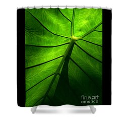 Shower Curtain featuring the photograph Sunglow Green Leaf by Patricia L Davidson