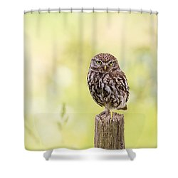 Sunken In Thoughts - Staring Little Owl Shower Curtain by Roeselien Raimond