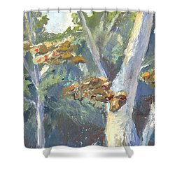 Sunlight And Sycamores Shower Curtain