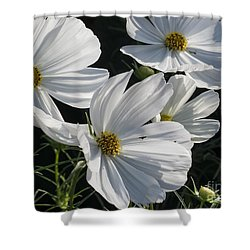Sunlight And White Cosmos Shower Curtain