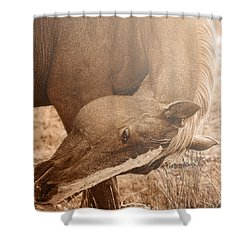 Sunlight And Grace Shower Curtain