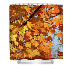 Shower Curtain featuring the photograph Sunlight In Maple Tree by Elena Elisseeva