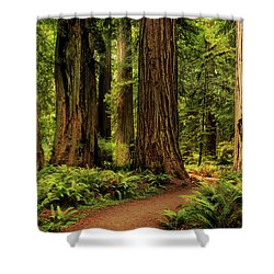 Shower Curtain featuring the photograph Sunlight In The Redwoods by James Eddy