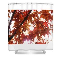 Sunlight Through Autumn Leaves - Photography - Nature - Seasonal Shower Curtain