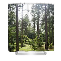 Sunlight Through The Trees Shower Curtain by Scott Lyons