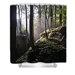 Sunlight Through Trees At Beartown State Park 3129c Shower Curtain