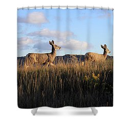 Sunlit Deer  Shower Curtain