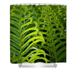 Sunlit Fern Shower Curtain