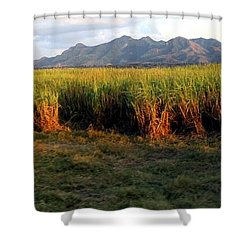 Sunlit Fields In Cuba Shower Curtain