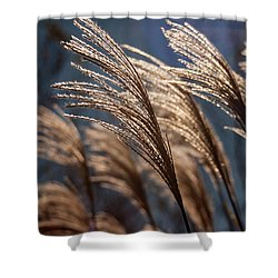 Sunlit Grass Shower Curtain
