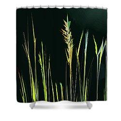 Sunlit Grasses Shower Curtain