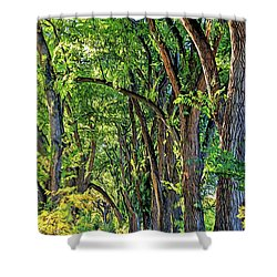 Sunlit Path Shower Curtain by Gina Savage