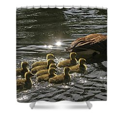 Shower Curtain featuring the photograph Sunlit Stroll by Donna Kennedy