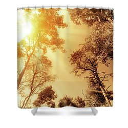 Sunlit Tree Tops Shower Curtain by Wim Lanclus