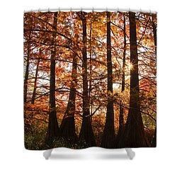 Shower Curtain featuring the photograph Sunlit Trees At Lake Murray by Tamyra Ayles