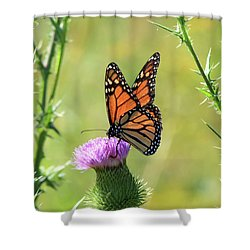 Sunlit Monarch Shower Curtain