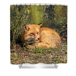 Sunning Fox Shower Curtain by Debbie Green