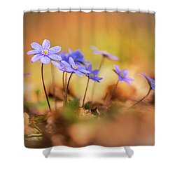 Shower Curtain featuring the photograph Sunny Afternoon With Liverworts by Jaroslaw Blaminsky
