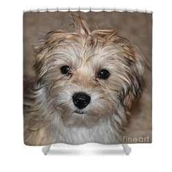 Sunny Boy Shower Curtain