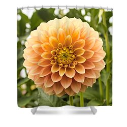 Sunny Dahlia Shower Curtain