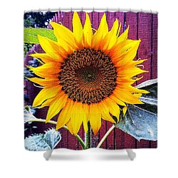 Sunny Day Shower Curtain by MaryLee Parker
