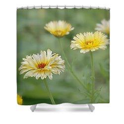 Sunny Daze Shower Curtain
