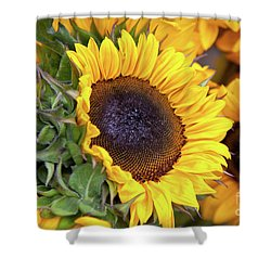 Shower Curtain featuring the photograph Sunny Face by Susan Cole Kelly