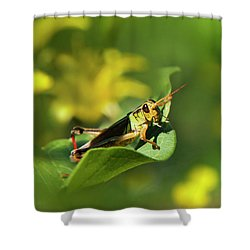 Green Grasshopper Shower Curtain by Christina Rollo