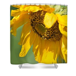 Sunny One Shower Curtain