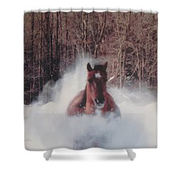 Sunny Running For The Barn. Shower Curtain by Jeffrey Koss